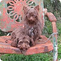 Adopt A Pet :: HAIKU & RUFF - Hartford, CT