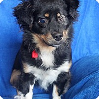 Adopt A Pet :: Princess - Wichita, KS