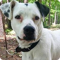 Adopt A Pet :: Hanna - Hagerstown, MD