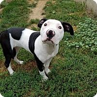 Adopt A Pet :: Ellis - Dayton, OH