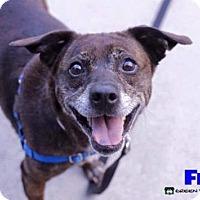 Adopt A Pet :: Fran - Grand Rapids, MI