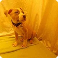 Adopt A Pet :: KEVIN - Upper Marlboro, MD