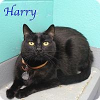 Adopt A Pet :: Harry - Bradenton, FL