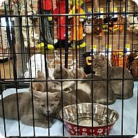Adopt A Pet :: Kittens! - Alhambra, CA