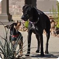 Adopt A Pet :: Clarissa - Santa Fe, TX