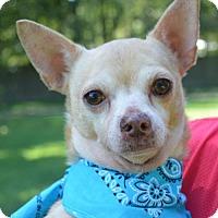 Adopt A Pet :: Sage - Lafayette, LA