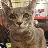 Adopt A Pet :: FeFe - Bensalem, PA