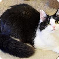 Adopt A Pet :: Ebner - DFW Metroplex, TX