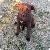 Adopt A Pet :: Big Dude - Wichita Falls, TX