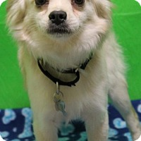 Adopt A Pet :: Duffy - Kennesaw, GA