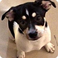Adopt A Pet :: Neo - Bradenton, FL
