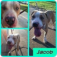 Adopt A Pet :: Jacob - Orange Cove, CA