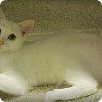 Adopt A Pet :: Snowflake - Seminole, FL
