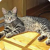 Adopt A Pet :: Lexi - Lafayette, CA
