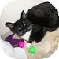 Adopt A Pet :: Caleb - Vancouver, BC