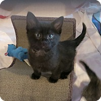 Adopt A Pet :: June Bug - Geneseo, IL