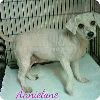 Adopt A Pet :: Annielane - House Springs, MO