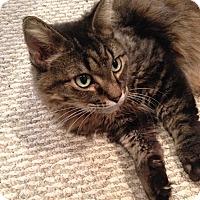 Adopt A Pet :: Mini - Lombard, IL