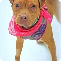 Adopt A Pet :: Libby - Ft. Lauderdale, FL
