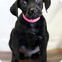 Adopt A Pet :: Salisbury - Waldorf, MD