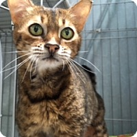 Adopt A Pet :: Chloe - Diamond Springs, CA