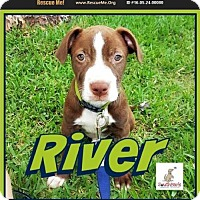 Adopt A Pet :: River - Pensacola, FL
