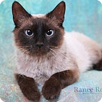 Adopt A Pet :: Pecan - Sterling Heights, MI