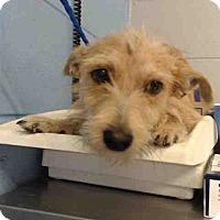 Adopt A Pet :: URGENT on 10/19 SAN BERNARDINO - San Bernardino, CA