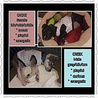 Adopt A Pet :: Cache - Richmond, CA
