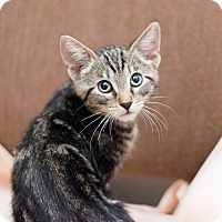 Adopt A Pet :: Daniel - Fountain Hills, AZ