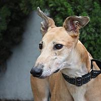 Adopt A Pet :: Appletini - Orange County, CA