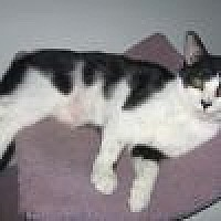 Adopt A Pet :: Toulie - Powell, OH