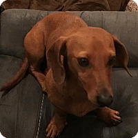 Adopt A Pet :: Tate - Humble, TX