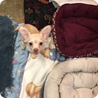 Adopt A Pet :: MEKKA - Elk Grove, CA