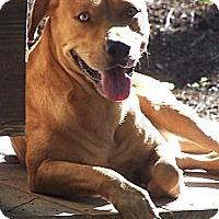 Adopt A Pet :: Railey - Little River, SC