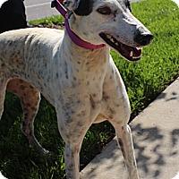 Adopt A Pet :: RTR Mesmerizer
