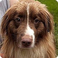 Adopt A Pet :: Ozzie ADOPTION PENDING!! - Antioch, IL
