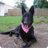 Adopt A Pet :: Cleo - Green Cove Springs, FL