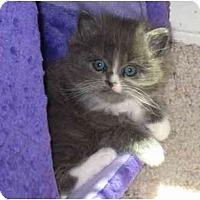 Adopt A Pet :: Hershey - Davis, CA