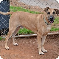 Adopt A Pet :: Metcalf - Athens, GA