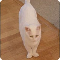 Adopt A Pet :: Alley - Monroe, GA