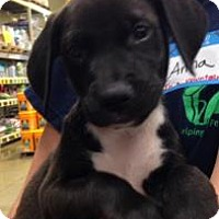Adopt A Pet :: Daffy - Gainesville, FL