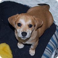 Adopt A Pet :: Rusty - Minneola, FL