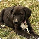 Adopt A Pet :: Paddington
