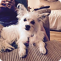 Adopt A Pet :: Kaylee - Bristol, CT