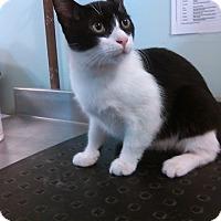 Adopt A Pet :: taco - Muskegon, MI