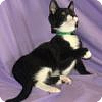 Adopt A Pet :: Mortimer - Powell, OH