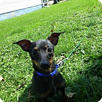 Adopt A Pet :: Aries - Wyanet, IL