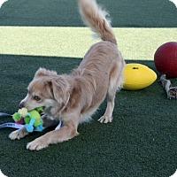 Adopt A Pet :: Jackson - Oakley, CA