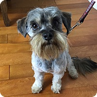 Adopt A Pet :: Percy - Redondo Beach, CA